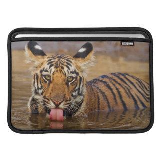 Petit animal de tigre royal de Bengale, eau Poches Pour Macbook Air