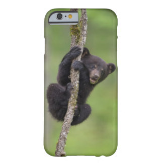 Petit animal d'ours noir jouant, Tennessee Coque iPhone 6 Barely There