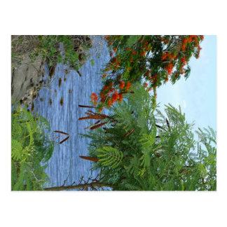 Petit Anse - Martinique, FWI Carte Postale