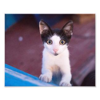 petit chat mignon impressions photographiques