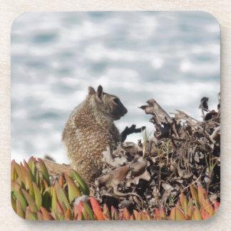 Petit écureuil sous-bock