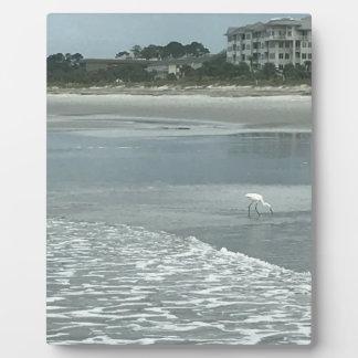 Petit héron sur la plage plaque photo