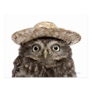 Petit hibou utilisant un chapeau de paille - cartes postales