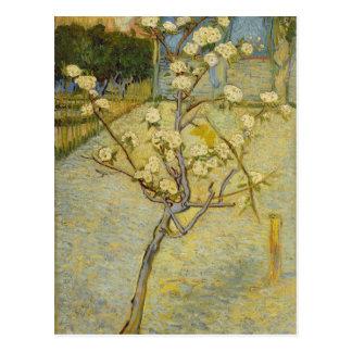 Petit poirier en carte postale de fleur