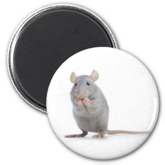 petit rat magnet rond 8 cm
