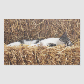 Petit somme de chat d'après-midi sticker rectangulaire