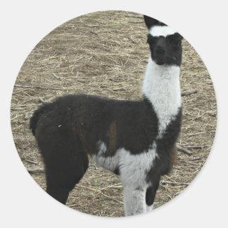 Petit type mignon de lama sticker rond