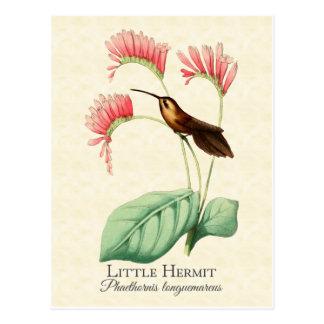 Petite carte postale d'art de colibri d'ermite