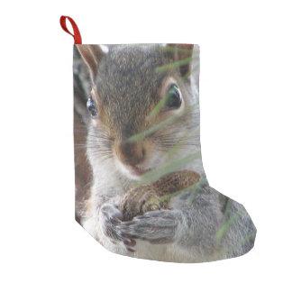 Petite Chaussette De Noël Un écureuil mignon avec le rongeur de nature de
