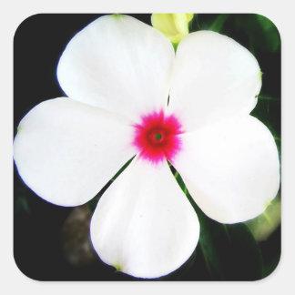 Petite fleur blanche de Vinca Sticker Carré