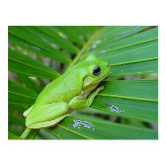 Petite grenouille verte carte postale