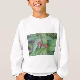 Petites fleurs de ressort sweatshirt