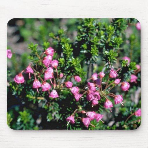 Petites Fleurs En Forme De Cloche Roses De Fleurs Tapis De
