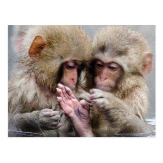 Petits singes en source thermale, Japon Carte Postale