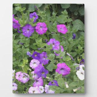 Pétunia pourpre de thème de jardin de ressort de impressions sur plaque
