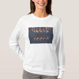 Peu de flamants montrant, lac Nakuru T-shirt