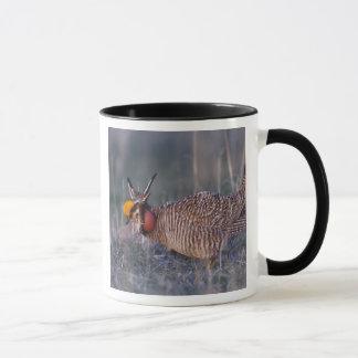 Peu de Prairie-Poulet, Tympanuchus Mug