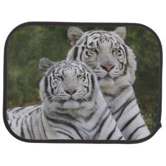 Phase blanche, tigre de Bengale, Tigre Tapis De Voiture