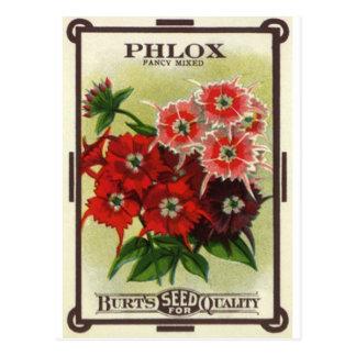 phlox mélangé cartes postales