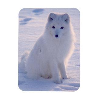 Photo arctique de Fox d'hiver conçue Magnets Souples