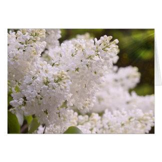 Photo assez blanche de lilas carte de vœux