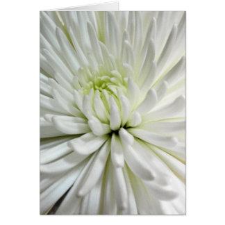 Photo blanche de fleurs de mamans de fleur de carte de vœux