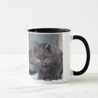 Photo bleue arctique de Fox d'hiver de phase de Mugs