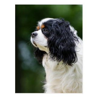 Photo cavalière d'amoureux de les chiens cartes postales