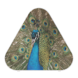 Photo couleur riche d'oiseau de paon haut-parleur bluetooth