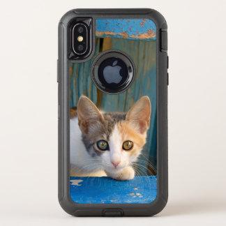 Photo curieuse drôle de yeux de calicot de chaton
