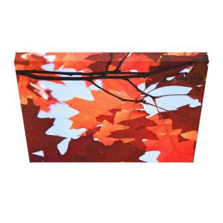 Photo d'arbre d'érable rouge toiles