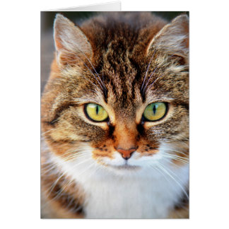 Photo de chat cartes de vœux