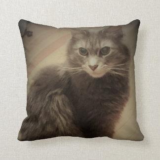 Photo de chat coussins carrés