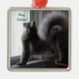 Photo de chat de ragondin du Maine Ornement Carré Argenté