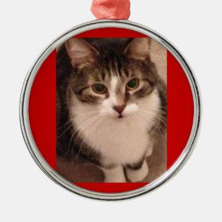 Photo de chat ornement rond argenté
