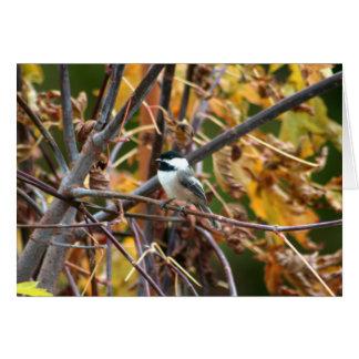 Photo de Chickadee Noir-Couvert mignon Carte De Vœux