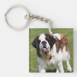 Photo de chien de St Bernard belle Porte-clé Carré En Acrylique Double Face