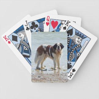 Photo de chien de St Bernard belle sur la plage Jeu De Cartes