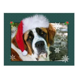 Photo de chien de St Bernard de Noël Carte Postale