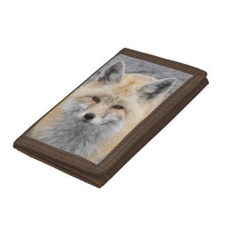 Photo de Fox rouge