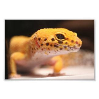 Photo de Gecko de léopard de mandarine