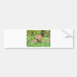 Photo de kit curieux de renard autocollant pour voiture