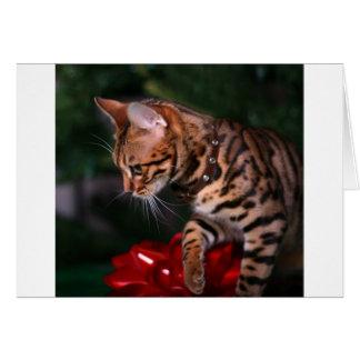 Photo de Kitty de Noël (chat domestique du Carte De Vœux