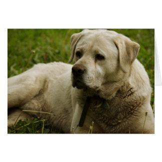 Photo de Labrador Carte De Vœux