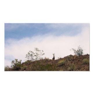 Photo de moutons de Big Horn de désert