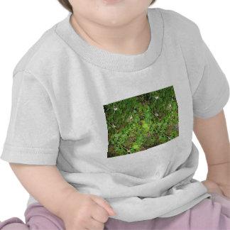 Photo de nature de feuille de baies de vignes de t-shirt