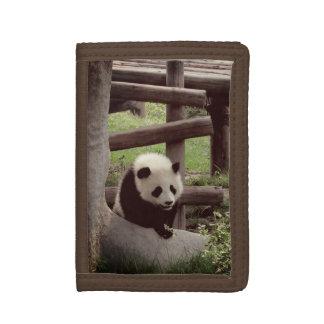 Photo de panda - rétro style
