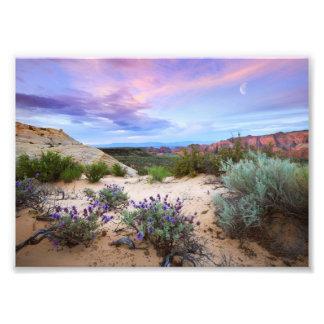 Photo de paysage de fleurs sauvages de lever de