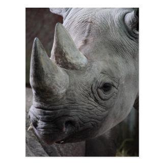 Photo de rhinocéros noir carte postale