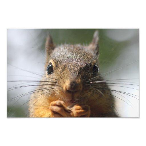 Photo de sourire d'écureuil mignon